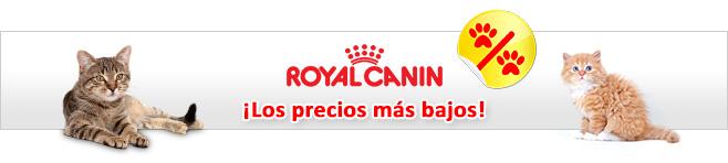 Royal Canin Feline pienso para gatos