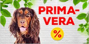 Accesorios primavera y verano para perros