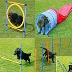 Accesorios agility para perros