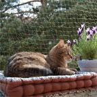 Redes y gateras para gatos