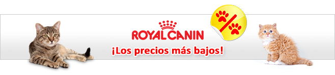 Royal Canin comida húmeda gatos